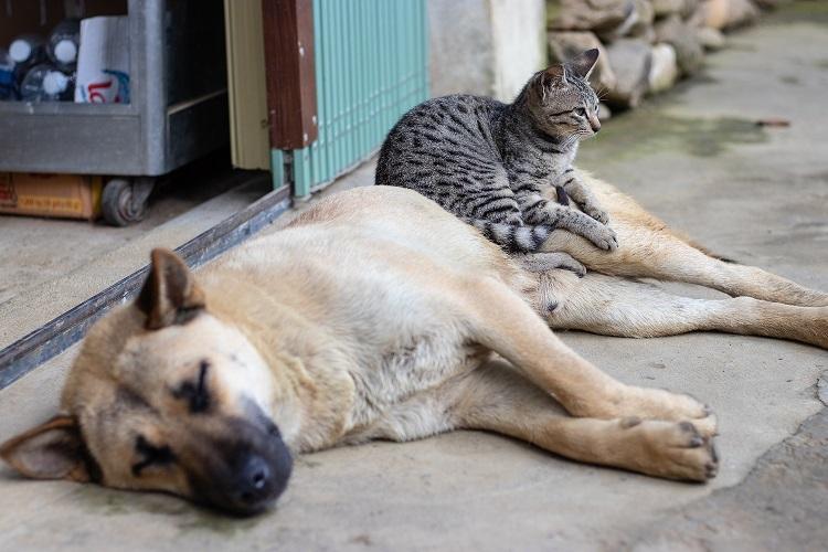 Katze und Hund liegen zusammen