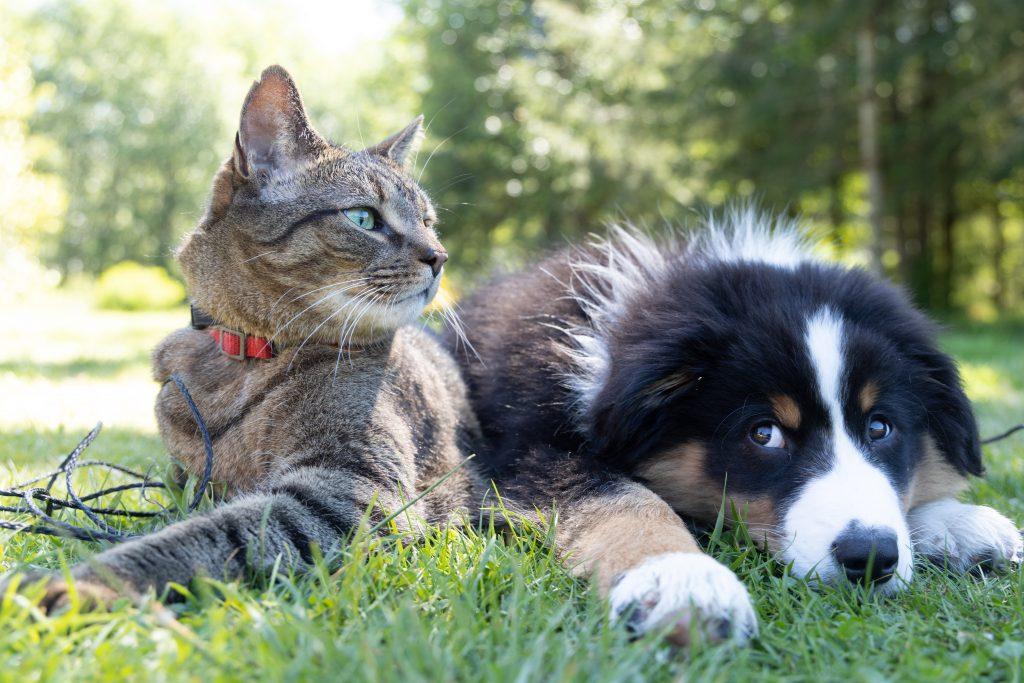 Katze und Hund auf Wiese
